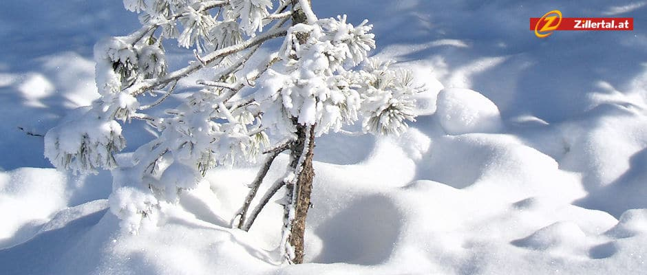Schneehöhen & Karte